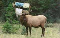 Funny Pictures of Antlers With Laundry On Them