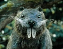 Funny Pictures of Chainsaw Woodchuck