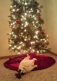 Picture of a Christmas cat with antlers
