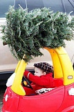 Picture of Christmas Tree on Toy Car