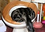 cat food toilet