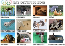 Pictures of Cat Olympic Events