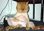 A funny cat picture showing depression after being shaved