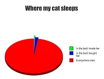 A funny cat sleeping pie chart