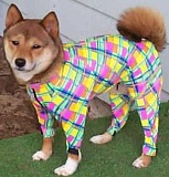 A funny picture of a dog outfit.