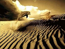 Funny Pictures of Dolphin Jumping in Desert