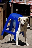 Funny Dog Picture of dog and stool