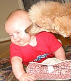 Funny Pictures of Dog Licking Baby's Face