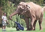 unny Jokes Pictures of an Elephant Caddying on a Golf Course