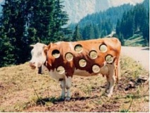 Funny Pictures of Holey Cow
