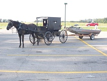 Funny Amish Horse Picture