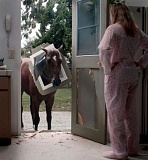Picture of a horse and a pet door.