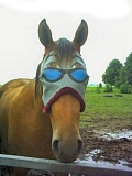 Funny Pictures of Horse Face