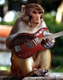 Funny pictures of monkey playing a guitar