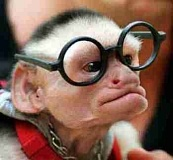 Funny Pictures of Monkey with Glasses