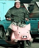 Funny Pictures of a Hog Motorcycle