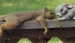 Funny Pictures of Squirrel Love For Rabbit