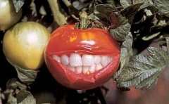 Funny Pictures of Raelian Tomato with Dentures