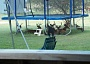 Funny Pictures of Deer Under Trampoline