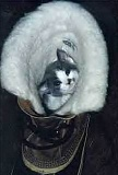 Funny Pictures of Kitten in Snow Boot