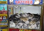 Funny Cat Pictures -  Catcher Arcade Game