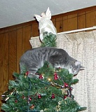 Picture of Cat in a Christmas tree