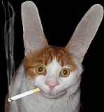 Funny Pictures of Smoking Cat With Huge Ears