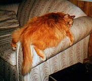 Funny Cat Pictures -  Lying On Couch