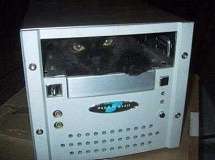 Funny Cat Pictures -  in Computer CPU