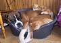 Funny Pictures of Dog and Kittens Sleeping