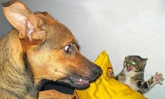 Funny Cat Pictures -  and Dog Face Off
