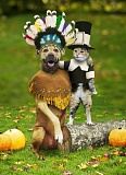 Funny Thanksgiving Pictures of Cat and Dog