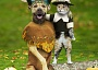 A Funny Thanksgiving Pictures