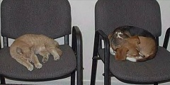 Funny Pictures of Cat and Dog in Vet Waiting Room
