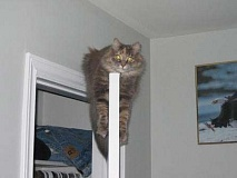 Funny Cat Pictures -  on Door Top
