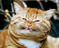 Funny Pictures of Cat with Fangs