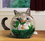 Funny Cat Pictures -  Staring at Fishbowl