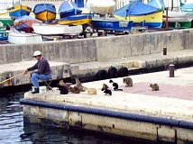 Funny Pictures of Man Fishing With Cats