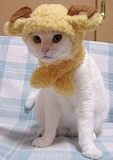 Funny Cat Pictures -  in a Goat Horn Hat.