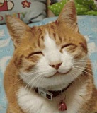 Funny Cat Pictures -  Grinning
