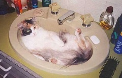 Funny Cat Pictures -  lying in a sink.