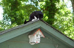 Funny Cat Pictures -  Watching Bird House