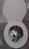 Funny Cat Pictures -  Sleeping in Toilet