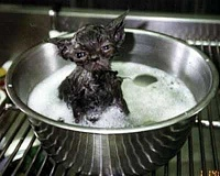Funny Pictures of Wet Cat In Bath