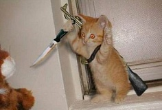 Funny Pictures of Kitten with Gun and Dagger