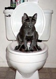 Funny Pictures of a Cat sitting on a toilet.