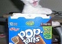 Funny Cat Pictures -  Kitten in Pop Tart Box