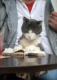 Funny Cat Pictures -  Reading A Book