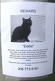 A funny missing cat reward poster