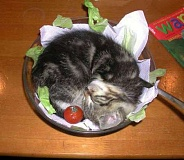 Funny Cat Pictures -  Kitten on Salad Plate